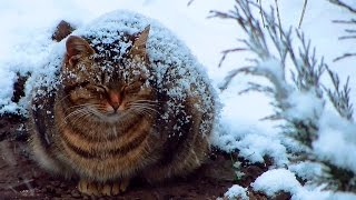 Pregnant cat sleep in the snow