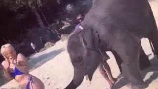 Xxxxxxx 2018 New elephant anf girl