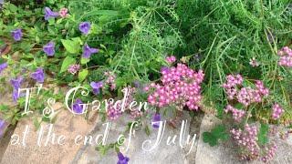 《7月末日の庭》ガーデニング*トウテイランの開花《T's Garden》