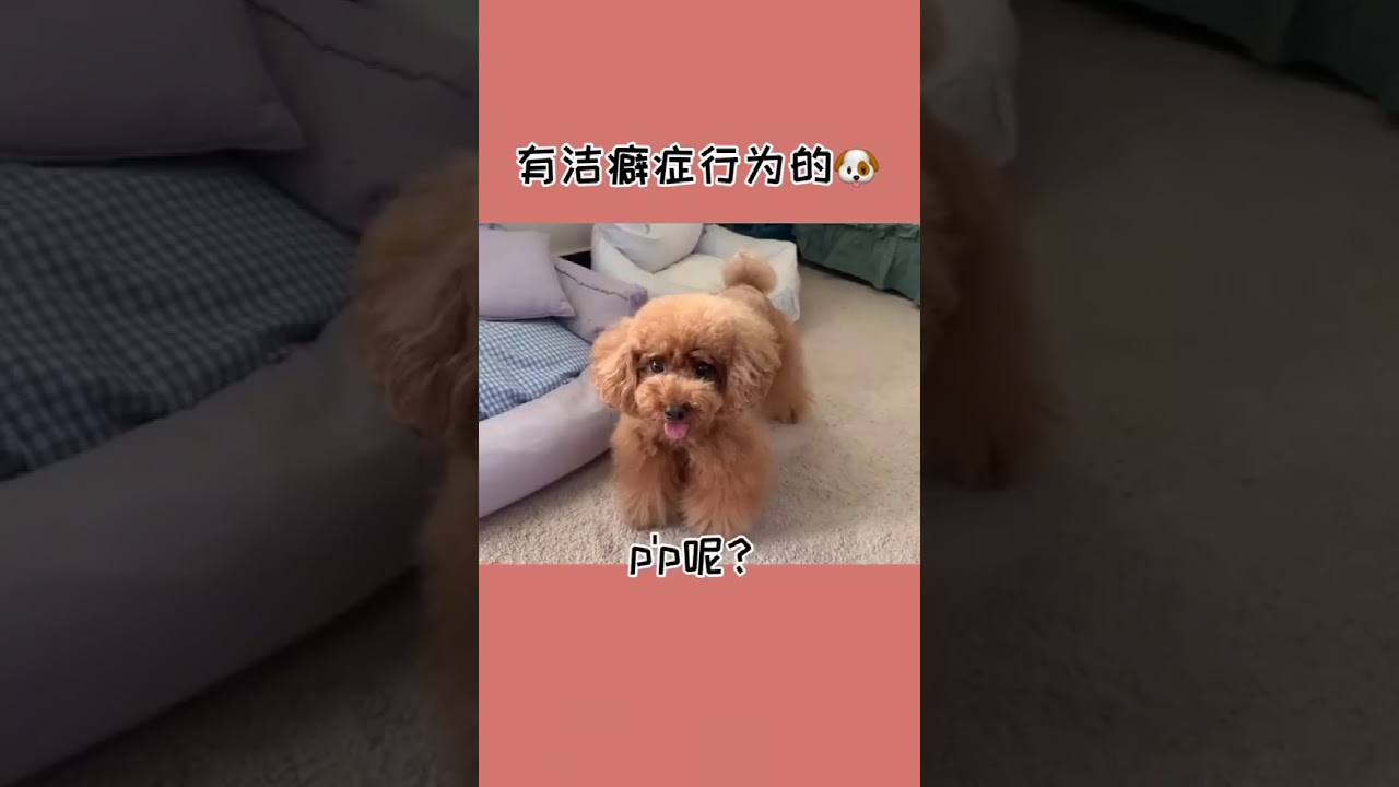 ❤️🐶這自律性我都自愧不如, My Cute & funny dog reaction !!