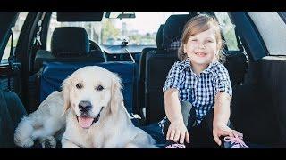 Первое в Беларуси такси для домашних животных