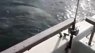 Приморцы запечатлели встречу с морским хищником