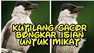 Download lagu KUTILANG SUPER GACOR BONGKAR ISIAN COCOK UNTUK MIKAT MP3