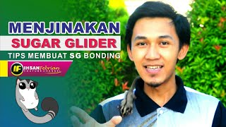 Menjinakan Sugar Glider || Sugar Glider Bonding Tips