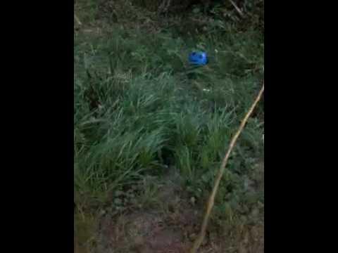 Darwin le chat avec un bambou oui