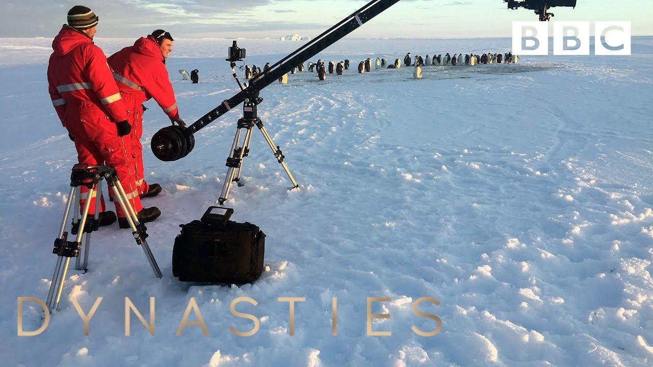 BBC film crew in penguin chick dilemma - BBC
