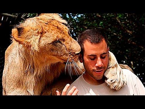 BIG CATS PLAYING WITH HUMANS | human playing with big cats compilation 1 | Funnycat 12