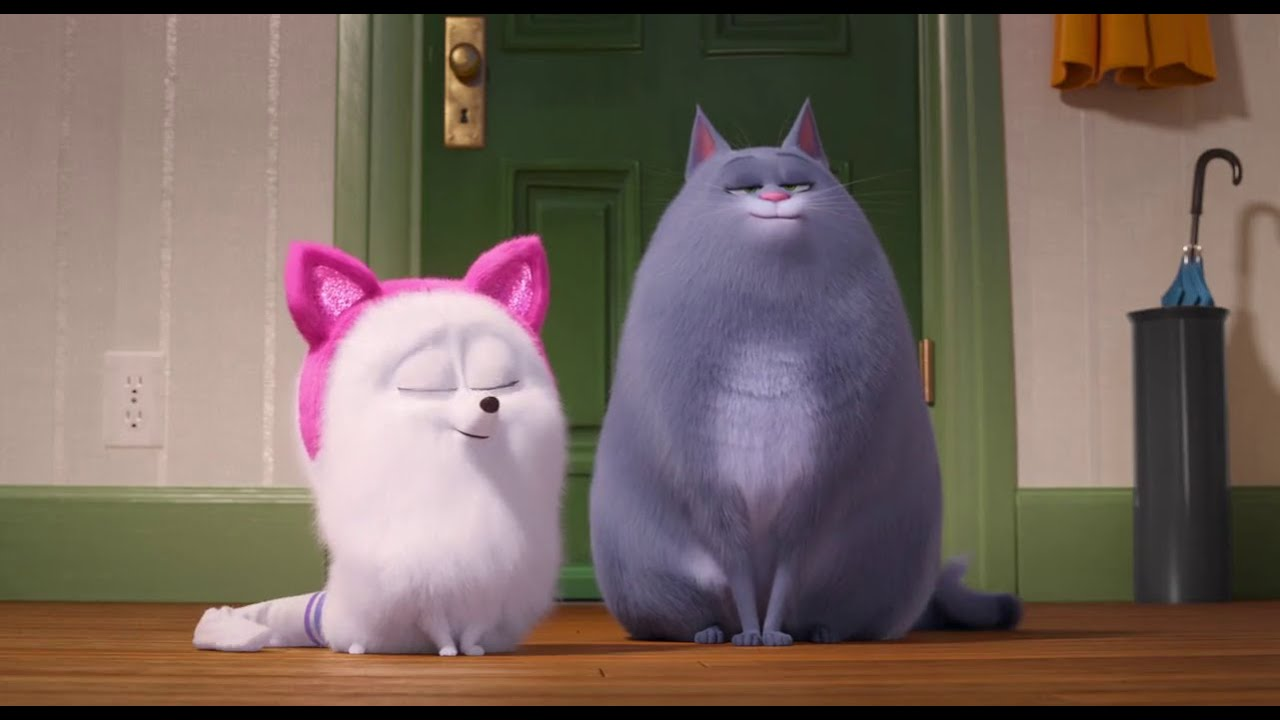 Learn how to be a cat from secret life of pets 2