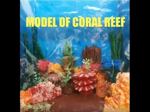 Model of coral reef youtube model of coral reef sciox Image collections