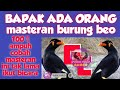 Masteran Burung Beo Bicara  Ampuh  Mp3 - Mp4 Download