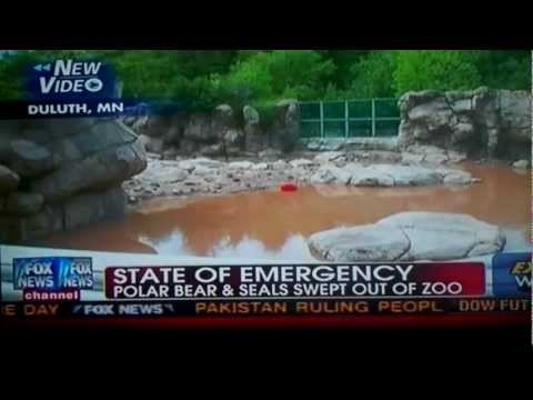 Minnesota In A State Of Emergency Polar Bear & Seals Swept Out Of Zoo