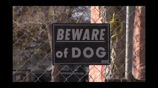 Rez Dogs  The Documentary