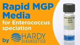 Rapid MGP Media™ for Enterococcus by Hardy Diagnostics
