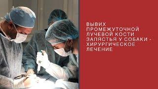вывих промежуточной лучевой кости запястья у собаки - хирургическое лечение