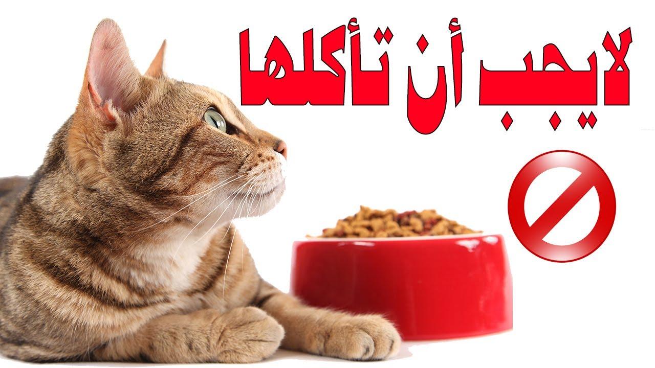 9 أكلات محرمة على القطط لا تطعموها هذه الأشياء لأنها تسبب هذه المشاكل Youtube
