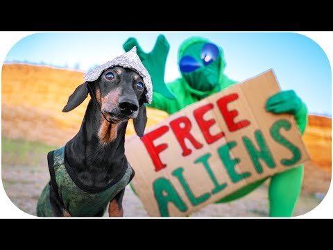 We're ready for Area 51 storm event! Funny dachshund dog video!