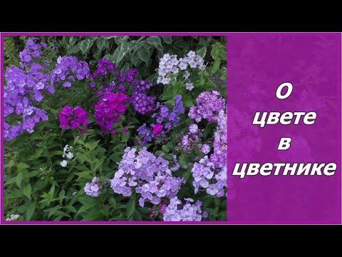 Как сделать цветник своими руками?  Сочетание цветов и цветовой круг  в саду.