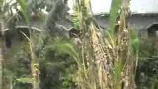 part1 my village video of narkatia fall in gopalganj district in bihar state of india