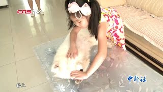 5岁女童能催眠宠物 / Five-year-old girl can hypnotize her pets