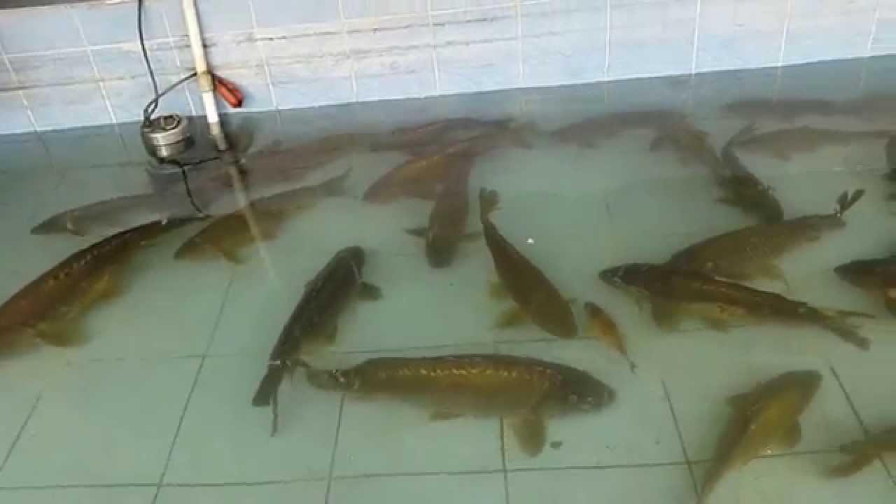 Big fish pool youtube for Pool of fish