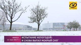 Снег в Минске 11 мая 2017 года