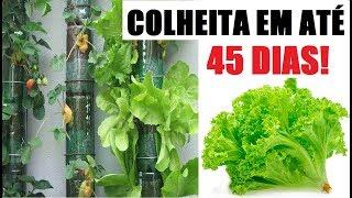 COMO PLANTAR ALFACE EM GARRAFA PET E COLHER EM 45 DIAS