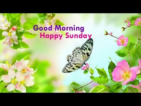 Happy Sunday Good Morning Whatsapp Status Hd Good Morning Song Hd
