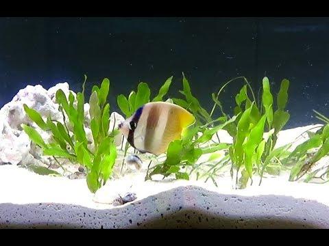 Marine Planted Aquarium