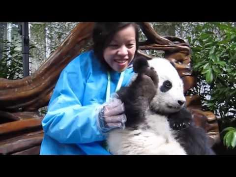 15 Милых Животных, Которые Могут Убить Тебя - Лучшие видео поздравления в ютубе (в высоком качестве)!