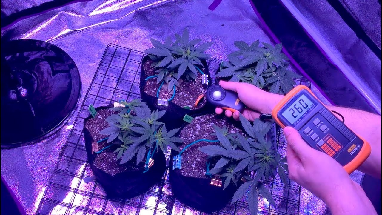 Maximize Your Weed Yields With The Same Grow Light Lux