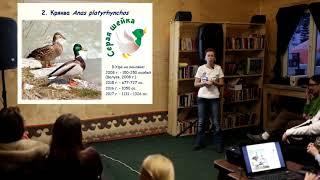 Лекция Зимующие птицы Уфы - проект Атлас птиц