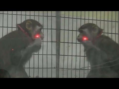 Scimmie Allo Specchio Science Youtube