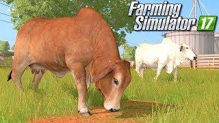 Krowy z Ameryki Południowej - Farming Simulator 17 [PLATINUM] | #34