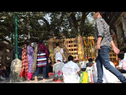 Afternoon under the Bodhi Tree, Bodhgaya