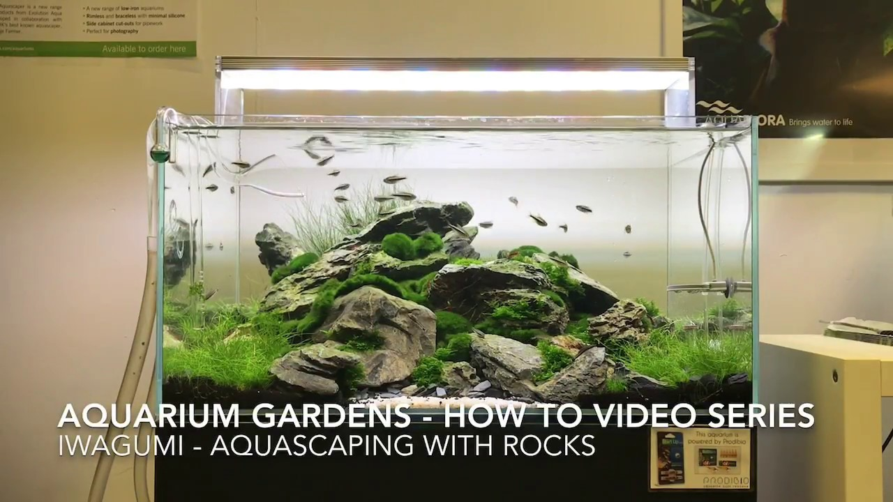 Iwagumi How To Aquascape With Rocks Youtube