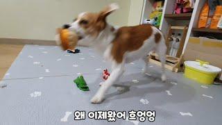 새집엔 새똥을 새장난감은 파괴를..