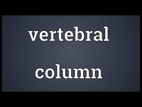 Vertebral column Meaning