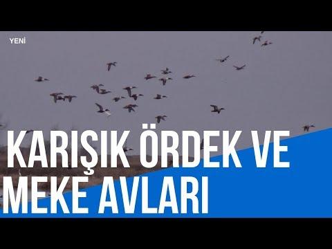 2019 ÖRDEK AVI - MEKE AVI -ÇAMURCUN AVI-DUCK HUNTİNG-caccia Alle Anatre-Утиная охота-صيد البط
