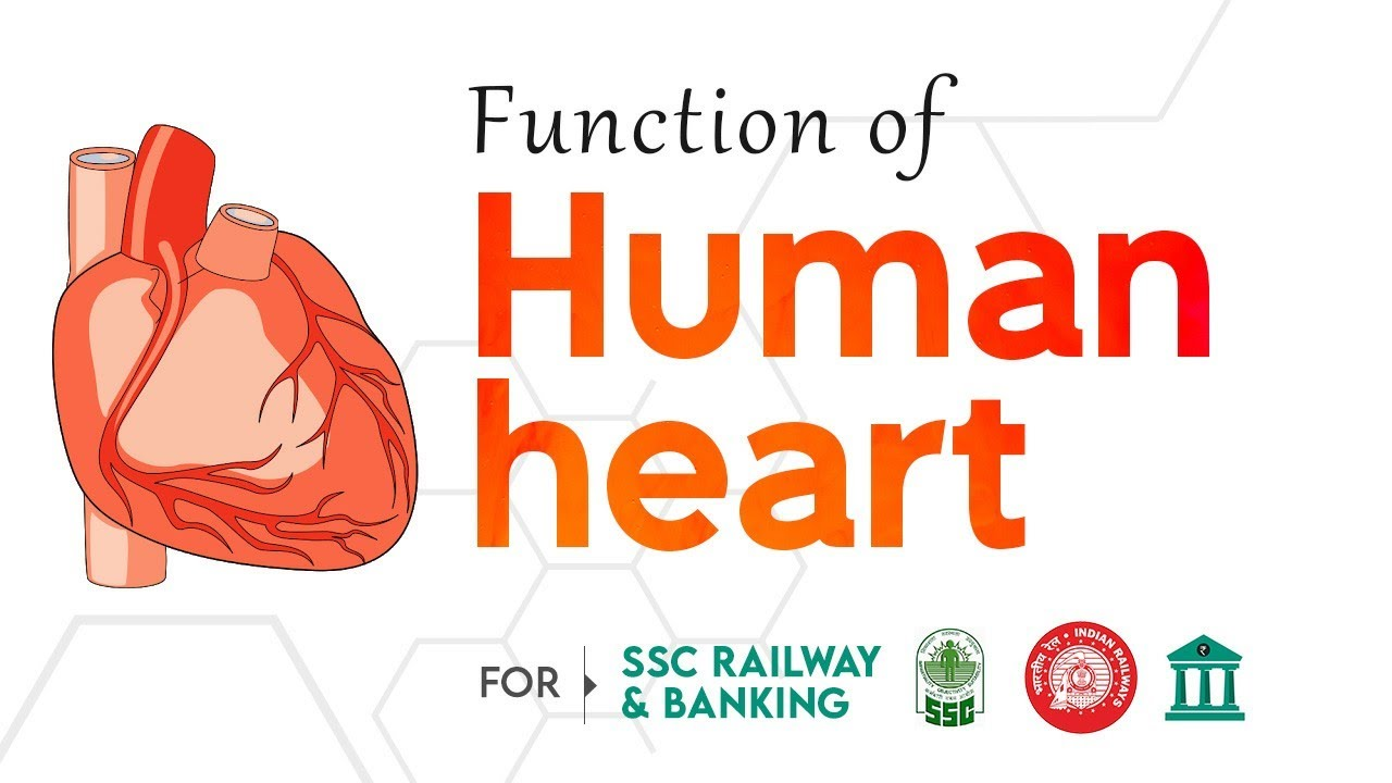 Working of human heart in hindi short clear and easy explanation working of human heart in hindi short clear and easy explanation for ssc and other competitive exam ccuart Choice Image