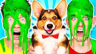 Download Dogs Pick our Mystery Slime Challenge 2 & How to Make the Best Funny DIY Orbeez Switch Up Game Mp3 and Videos