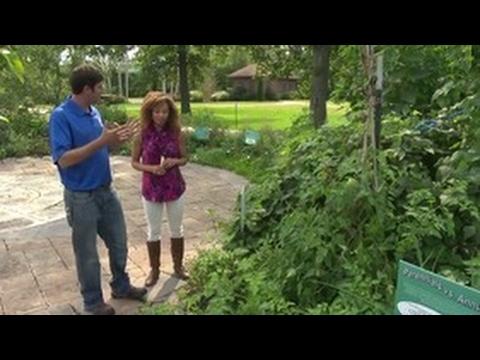 Experience Michiana - Wellfield Botanic Gardens - YouTube