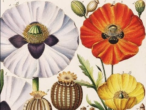 The Royal Horticultural Society's Lindley Library: Safeguarding Britain's Horticultural Heritage