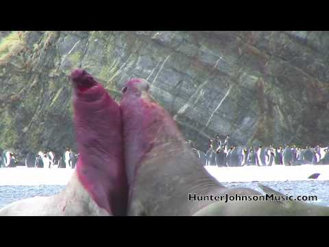 Battle Combat Elephant Seals Hunter Johnson Music Video You Tube.m4v