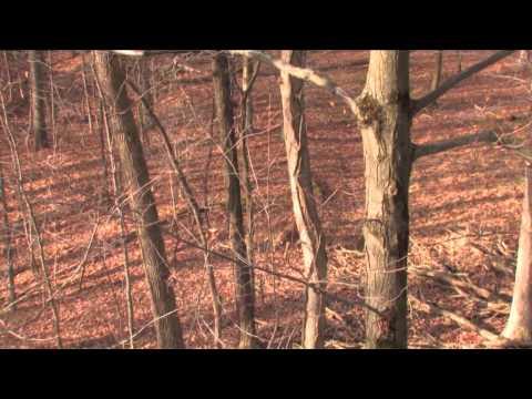 Blitz TV - Ohio Bruiser Whitetails