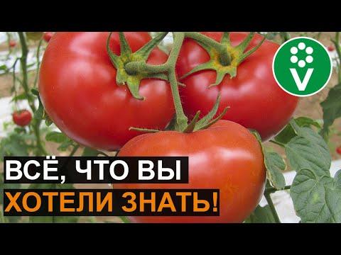САМОЕ ВАЖНОЕ о выращивании томатов. Ответы на самые популярные вопросы