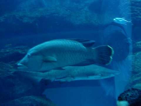 Aquarium in the Mall of Emirates