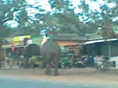 Elephant Attack in Umayanalloor.flv