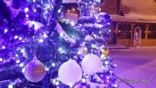 Ель световая, Московская усадьба Деда Мороза