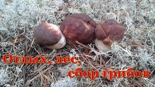 Отдых, лес, сбор грибов.