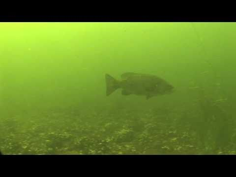 Life in the Shallows of Lake Champlain